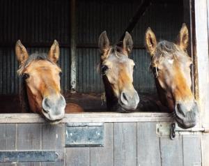 Winners of the future! Jumping foals at Dibble Bridge...