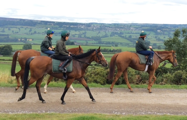 Next Edition riding home from the gallops