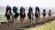gallops close up