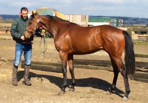 The gorgeous looking Archipenko 2 year old.