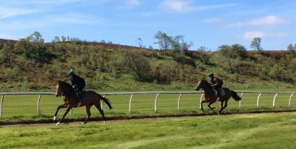 The two year olds cantering down on the AW to warm up.