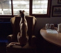 Sukey keeps watch from the Office....