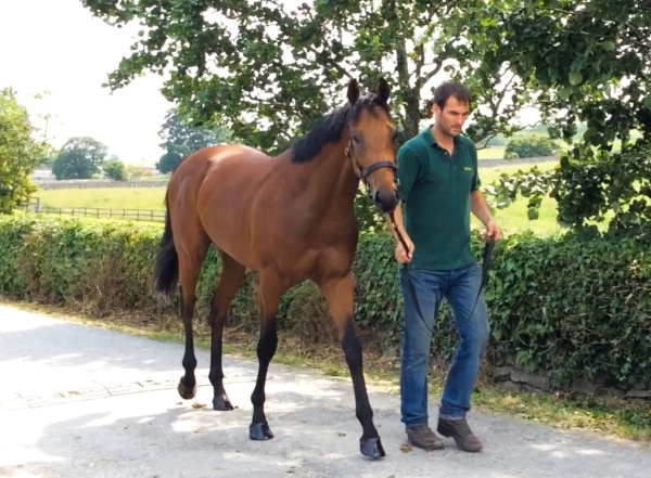 Phil with the Castleton Bloodstock 'Zoffany' yearling colt.