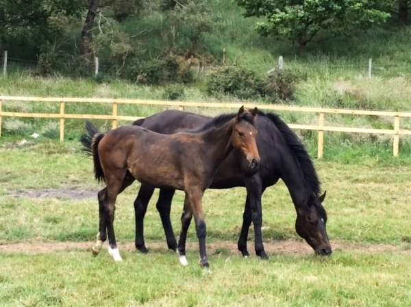 'Robin' with his dam lady Chapp who is in foal to 'Presenting'
