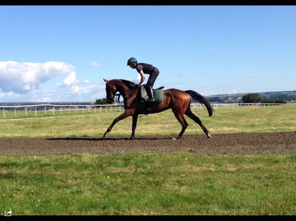 Mr Selby, our runner at Market Rasen tomorrow evening.