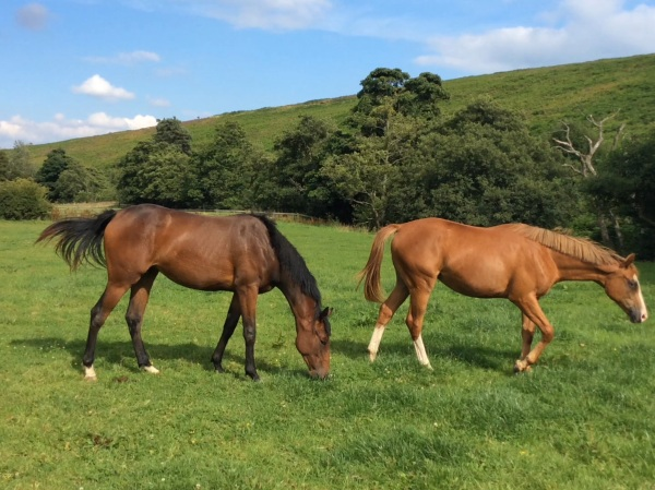 Castleton Bloodstocks duo by Equiano and Arcano