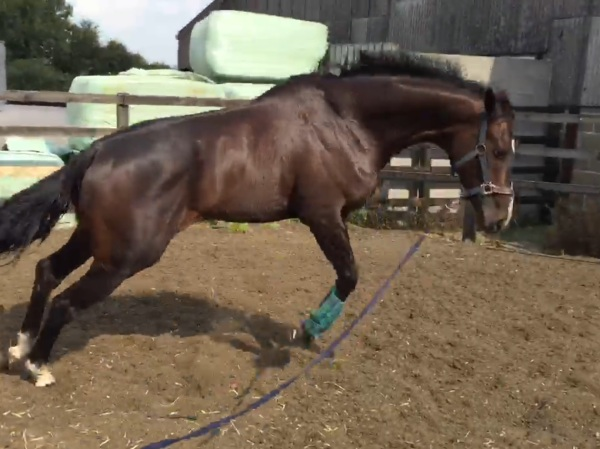 Keep up having a play on the lunge