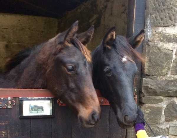 Twix and Coco, jumping foals of the future at Dible Bridge