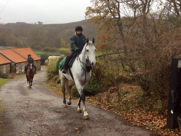 Kings's Grey strides out on his roadwork at Dibble Bridge