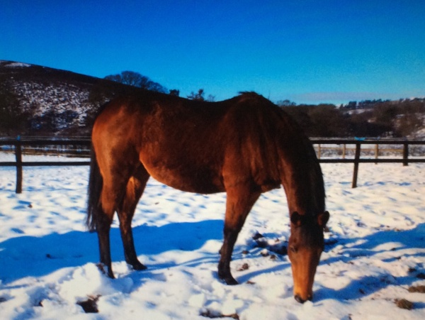 Pickworth, in foal to Scorpion
