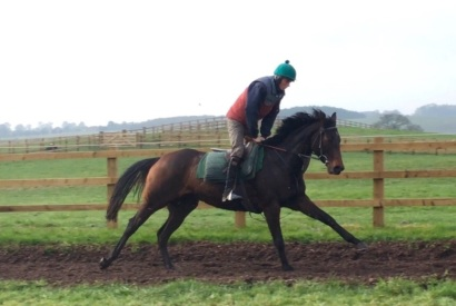 The 4 year old Scorpion bumper filly out of Masquereigne