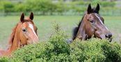 kirbyshorses