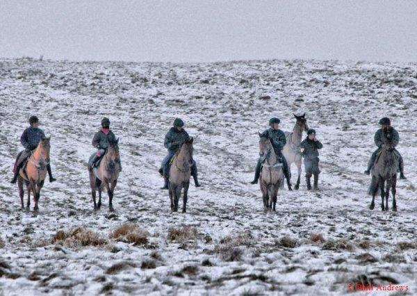 snow horses!