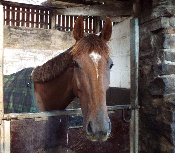 fair and sun horses 053