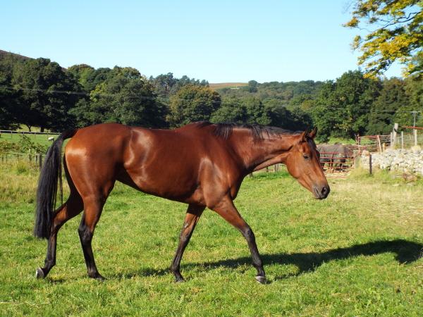 fair and sun horses 057