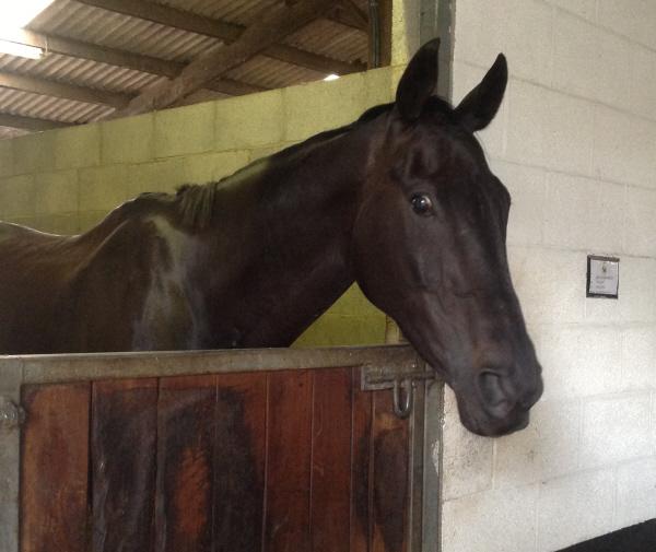 New horse O'r du Dairies