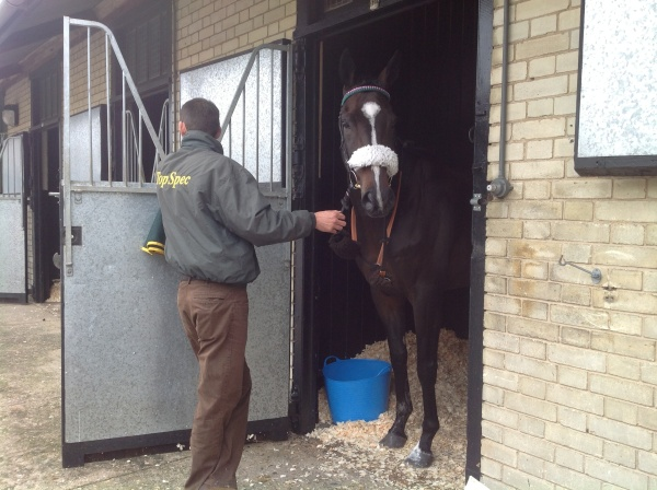 Ready to go to the paddock at Newmarket
