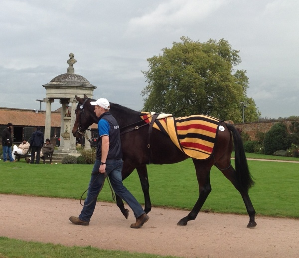 I like this one by High Chapparal, unraced Aidan O Brien