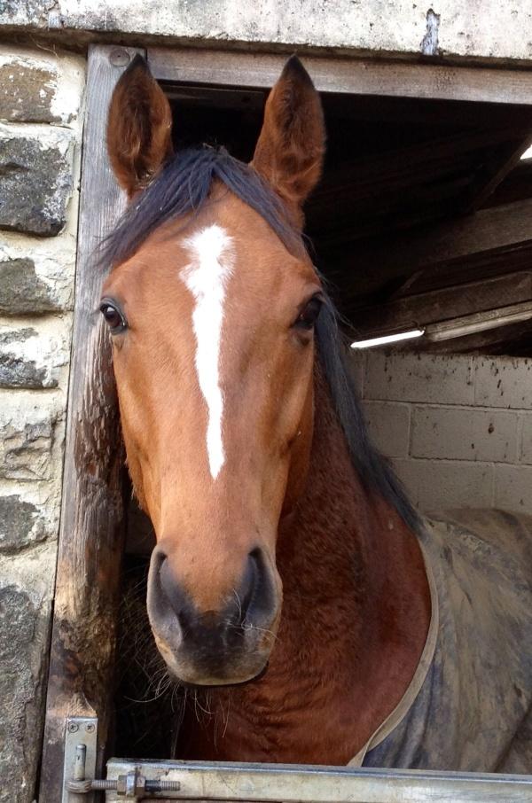 New horse Cavalieri, on a winter break.