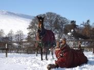 sunny sledging & horses playing 050