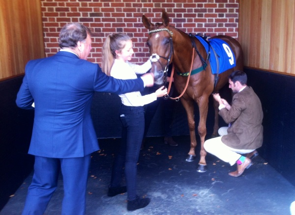 Dr Irv being saddled at York last time