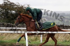 Unraced bumper prospect 'Dibble Bridge'