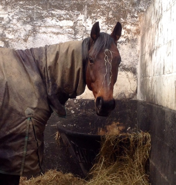 Back to Paris still looking for his forever home. A super quiet hack.