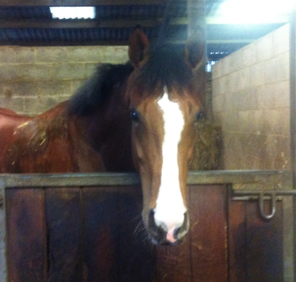 Splash of Verve, 2 year old by Fast Company  who runs tomorrow at Wolverhampton.