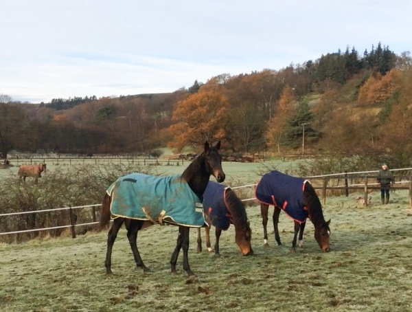 Left to right, Ruby Wood, hula Ballews foal (midget Gem) and new Sir Prancelot filly, (Betty)