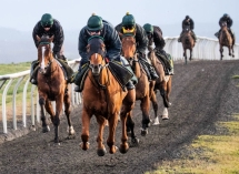 Preachers Belle heads the gallop at home