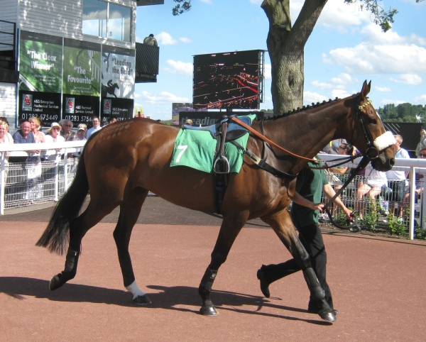 Simply Smashing 2 years later running in the Summer Grand national at Uttoxeter