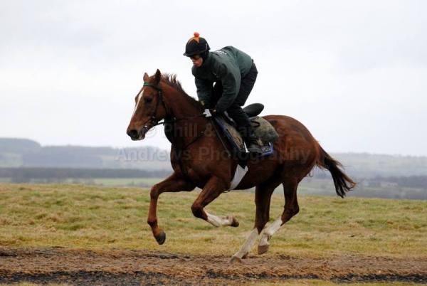 Our new 10lb conditional jockey, Hugo Thompson-Brown