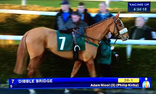 Best turned out winner, Dibble Bridge, in rhe second div. of the bumper