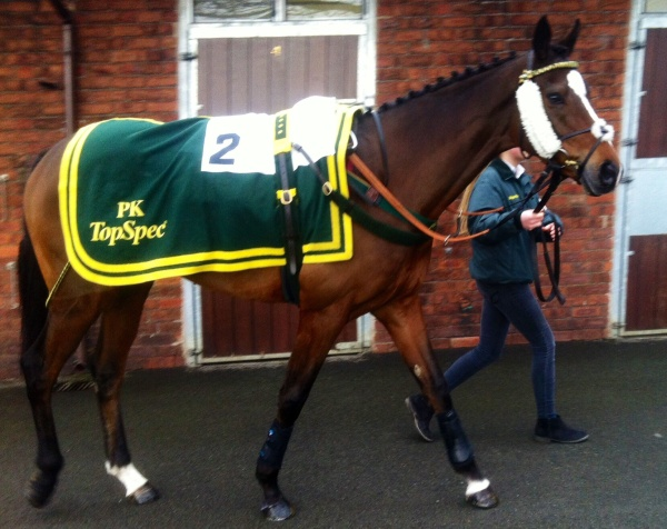 Istimraar on his way to the paddock yesterday.