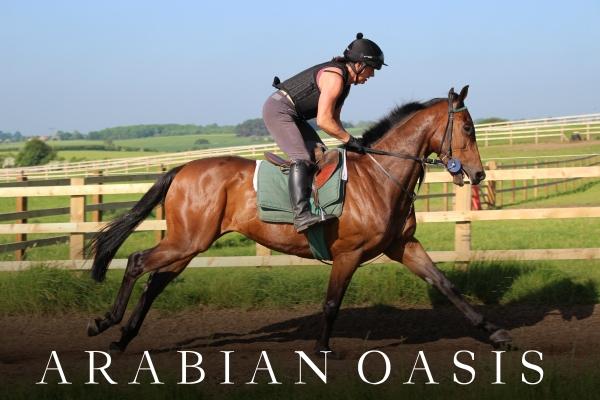 ARABIAN OASIS (5)