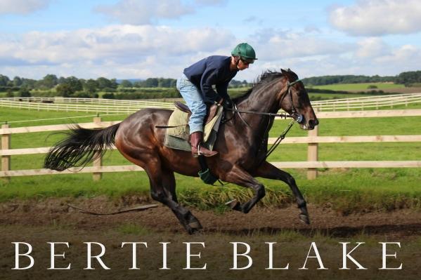 Bertie (4)
