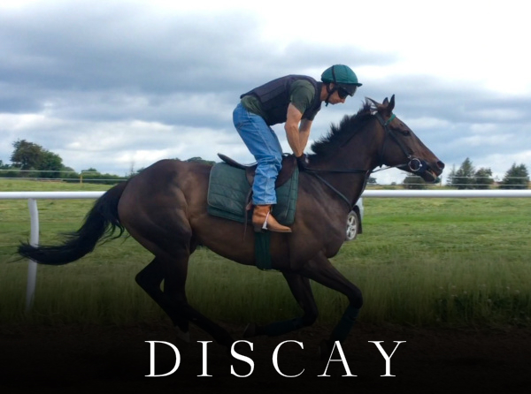 discay