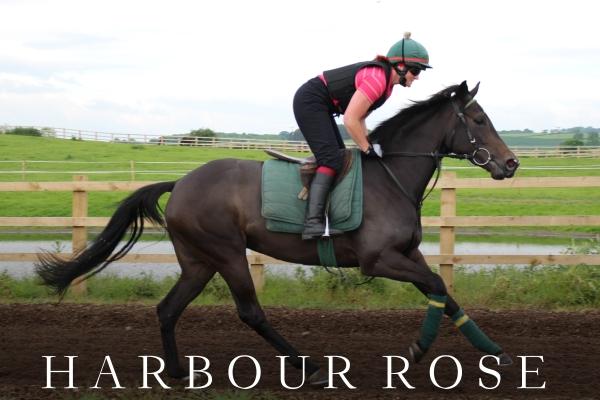 HARBOUR ROSE