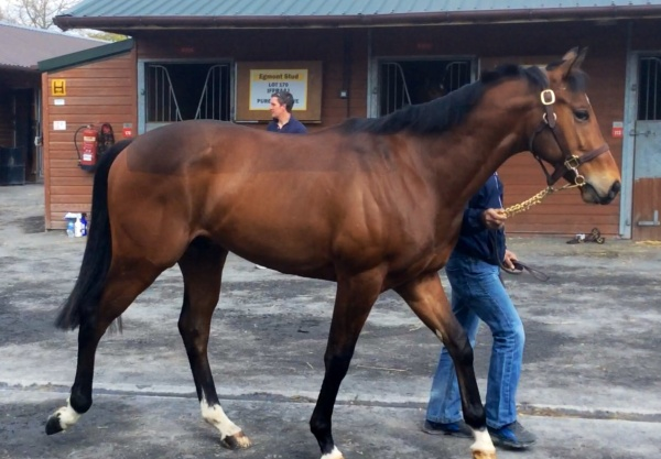 The Arcano colt looking good at Doncaster yesterday
