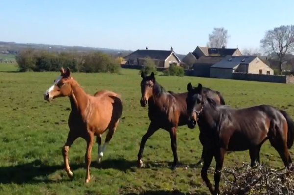 The yearling fillies