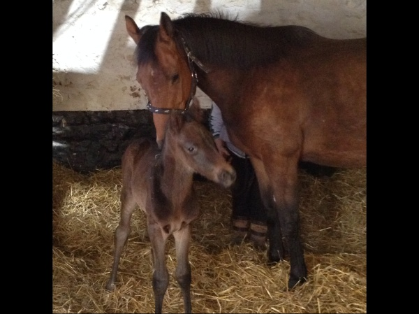 Pickworth and her bay colt.