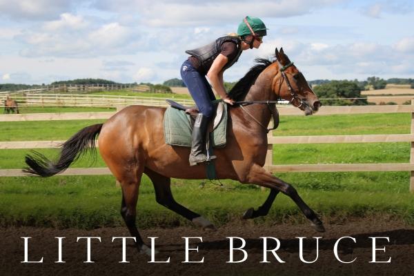 Little Bruce (2).jpg