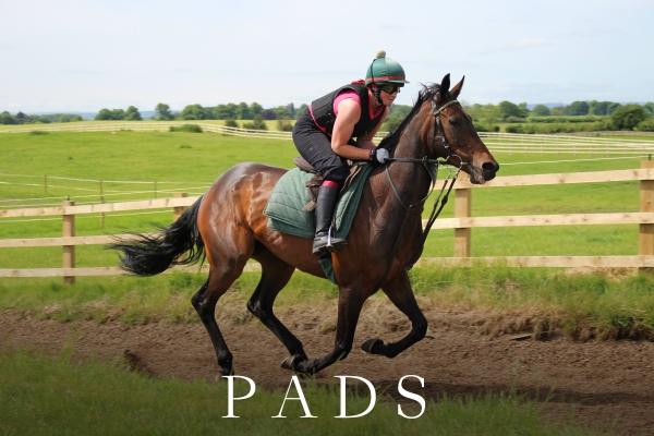 PADDY (2)