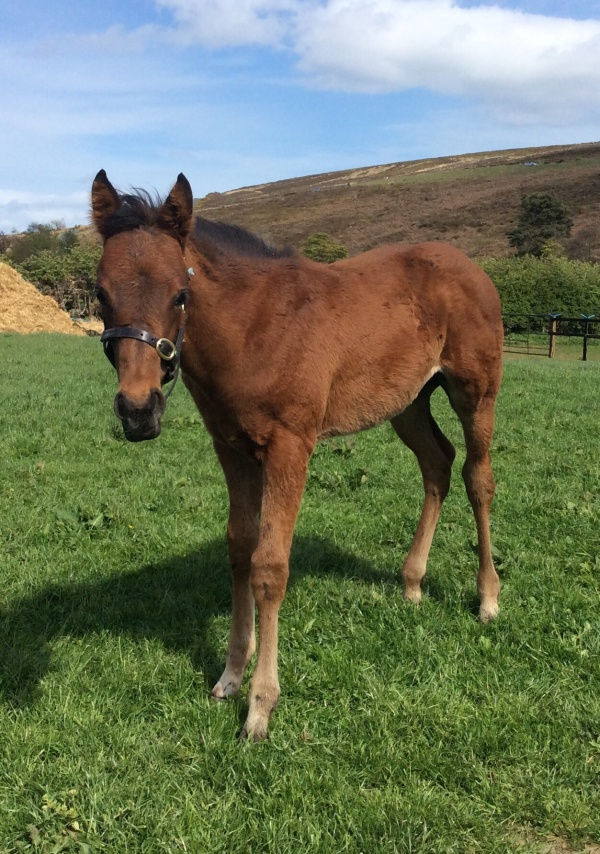 Marmot's foal who is now called 'Rebel' for his stable name.