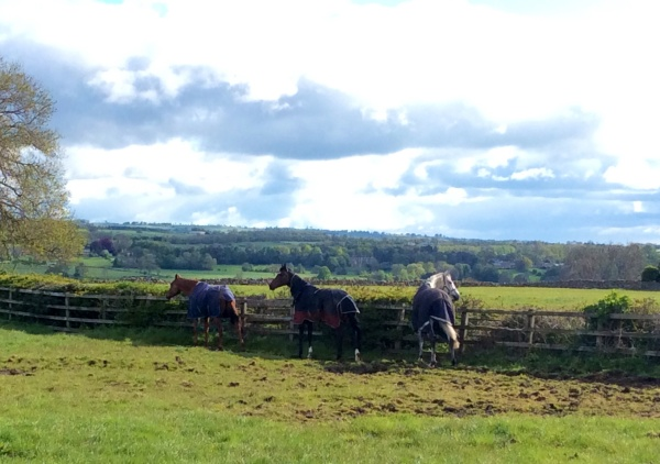 Lexington Bay (centre) out with Colin and Kings Grey ( Christian)