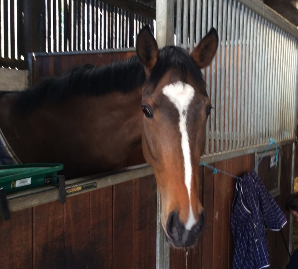 The new PKR Partnership filly