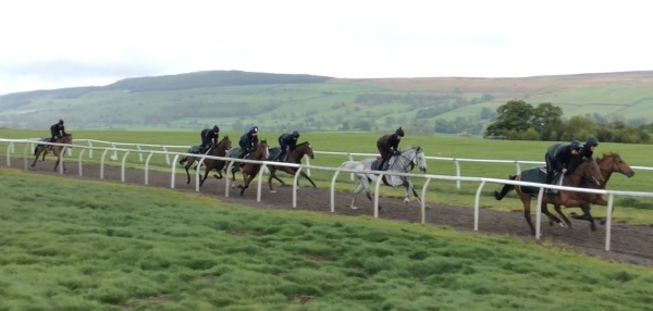 King's Grey leads first lot.
