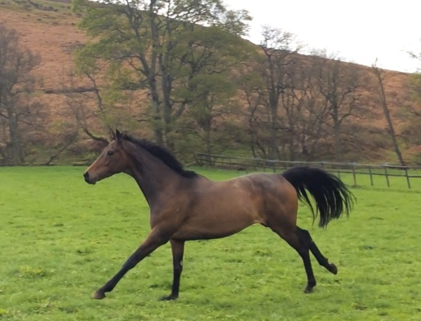 Musikhani, in foal to Fast Company