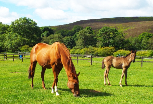 Epicurean and her colt foal COCO by Passing Glance - a full brother to AVIDITY