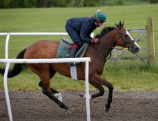 Quadriga at home with Julie on the gallops
